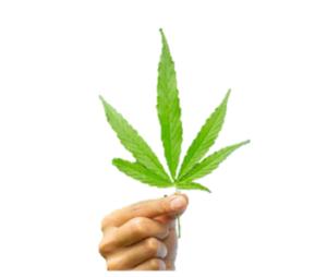 Green Leaf CBD Oil - българия - цена - аптеки