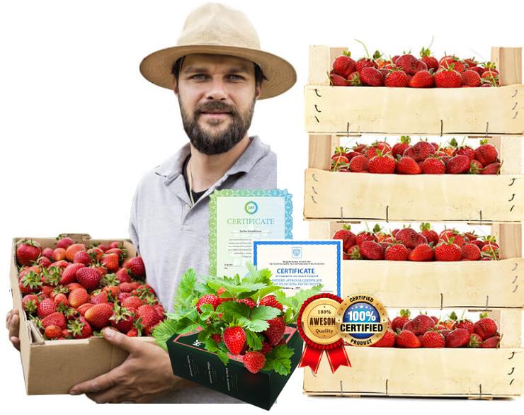 Home Berry Box - българия - цена