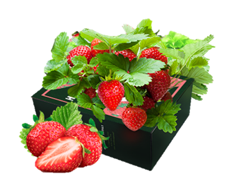 Home Berry Box - състав